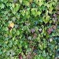 Nature Bushes 021