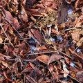 Ground Leaves 026