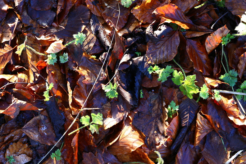 Ground_Leaves_015.JPG