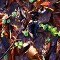 Ground Leaves 015