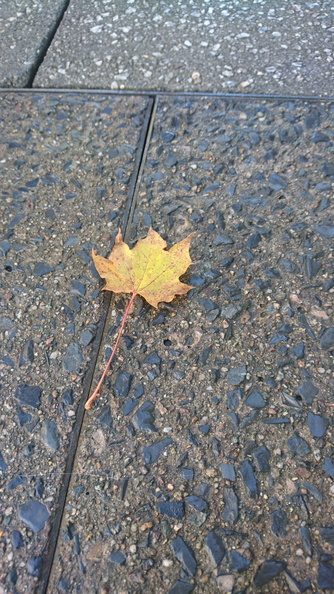 Ground_Leaves_017.JPG