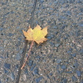 Ground Leaves 017