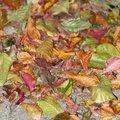 Ground Leaves 018