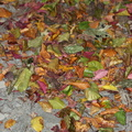 Ground Leaves 019