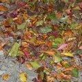 Ground Leaves 019