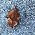 Ground Leaves 020