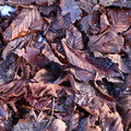 Ground Leaves 021