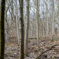 Nature Forest 073