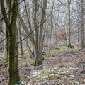 Nature Forest 074