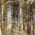 Nature Forest 069