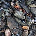 Ground Stones 031