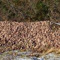 Soil Gravel 069