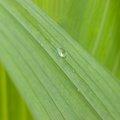 Water Waterdrops 043