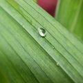 Water Waterdrops 054