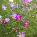 Nature Flowers 102