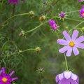 Nature Flowers 103