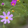 Nature Flowers 104