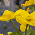 Nature Flowers 055