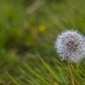 Nature Flowers 059