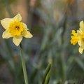 Nature Flowers 062