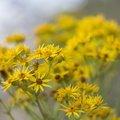 Nature Flowers 065
