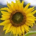 Nature Flowers 069