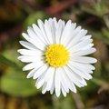 Nature Flowers 073