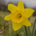 Nature Flowers 074