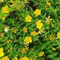 Nature Flowers 081