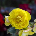 Nature Flowers 083