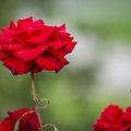 Nature Flowers 088