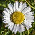 Nature Flowers 093