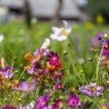 Nature Flowers 094