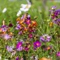 Nature Flowers 095