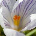Nature Flowers 096