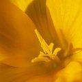 Nature Flowers 099