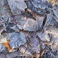 Ground Frozen 004