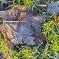 Ground Frozen 007