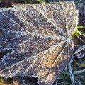 Ground Frozen 008