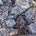 Ground Frozen 011