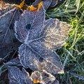 Ground Frozen 012