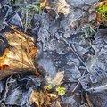 Ground Frozen 013