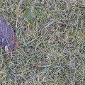 Ground Frozen 015