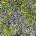 Ground Frozen 022