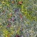 Ground Frozen 022