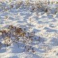 Ground Frozen 024