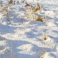 Ground Frozen 025