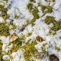 Ground Frozen 027