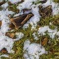 Ground Frozen 029