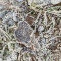 Ground Frozen 031